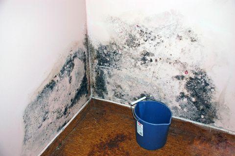 Как пользоваться антисептиком «Картоцид-компаунд» для борьбы с плесенью на стенах